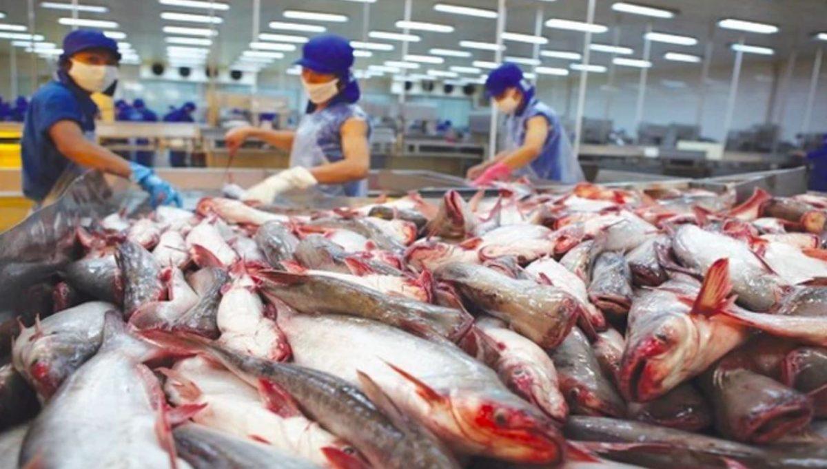 Theo Hiệp hội Chế biến và Xuất khẩu Thủy sản Việt Nam (VASEP) cho biết